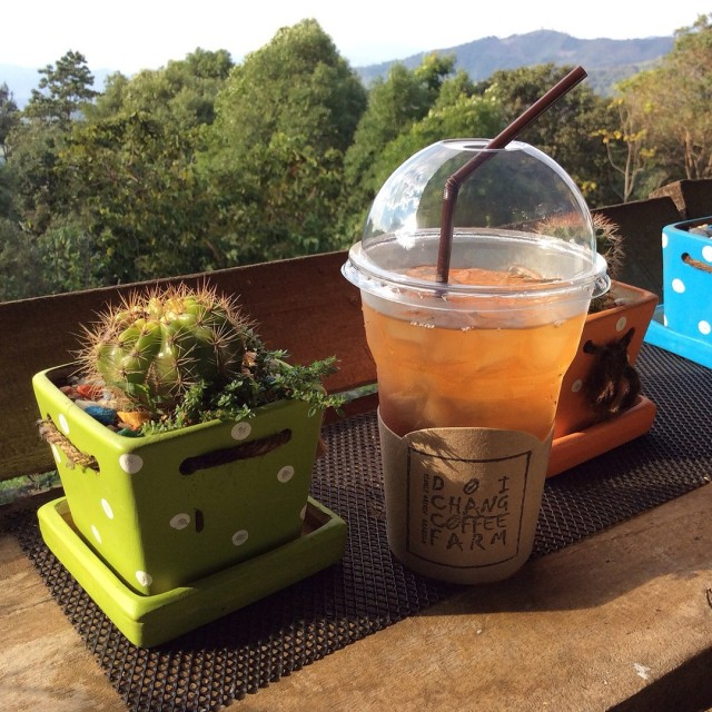 Coffee Flower Tea - Mae Sa Ruai's Doi Chang Coffee Farm|Coffee Shop / Tea Room - Chiang Rai